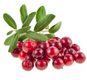 cranberry-plant
